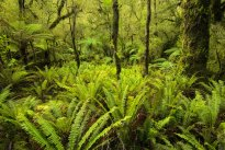 Forest of Fiordland